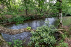 Fightingtown Trout Stream